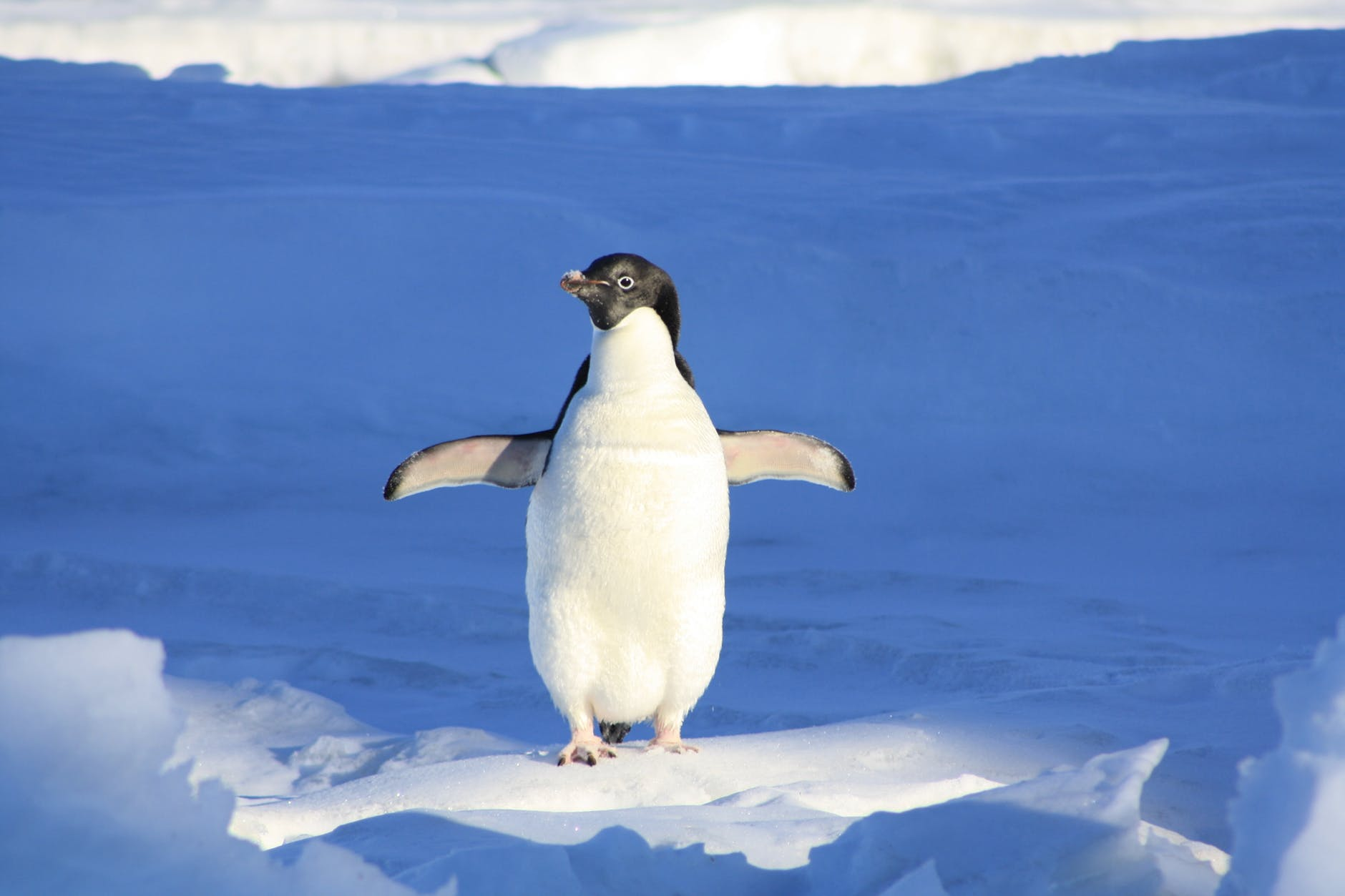 close up photography of penguin on snow